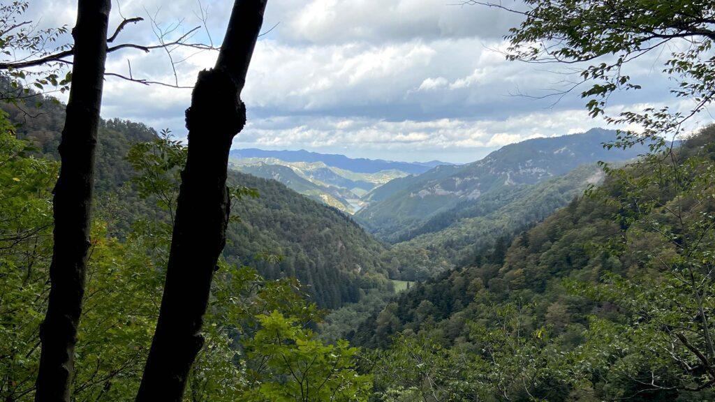 umbriaction-shinrin-yoku-the-mystic-woods